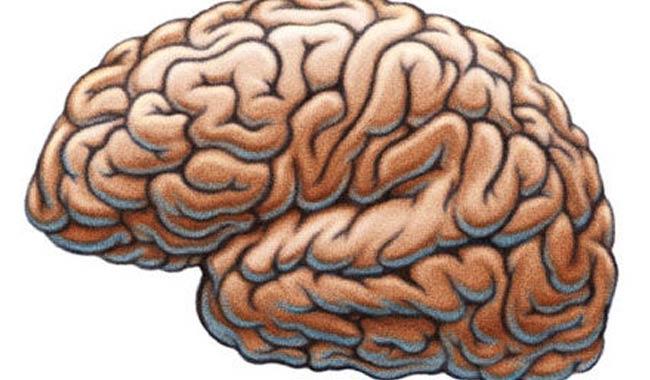 Nel cervello un GPS organizza pensieri