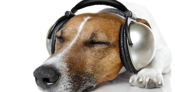 Spotify lancia playlist per i nostri animali domestici