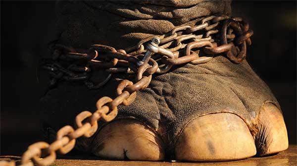 Sul web foto di animali da circo in pessime condizioni